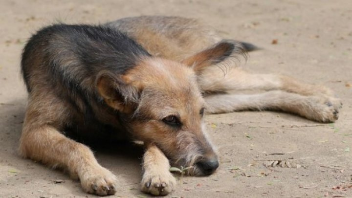Un preot din Brazilia aduce câini maidanezi la slujbă pentru a le găsi stăpân