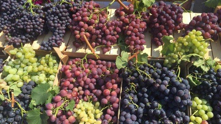 PREMIERĂ pentru Moldova! Strugurii și vinurile moldovenești vor ajunge în septembrie pe mesele din Polonia