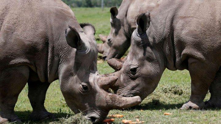 TRAGEDIE într-o grădina zoologică din Buenos Aires. Un rinocer şi o girafă au murit