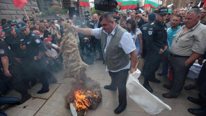 Fermierii din Bulgaria incendiază lână şi varsă lapte pe jos. Protest contra sacrificării animalelor din cauza izbucnirii pestei ovine