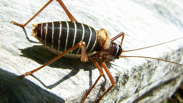 Trucuri naturale pentru a scăpa repede de insecte și dăunători