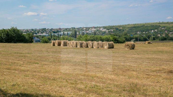 Procesul de documentare a terenurilor agricole din raionul Dubăsari, AVANSEAZĂ! 78% din proprietari au primit certificate