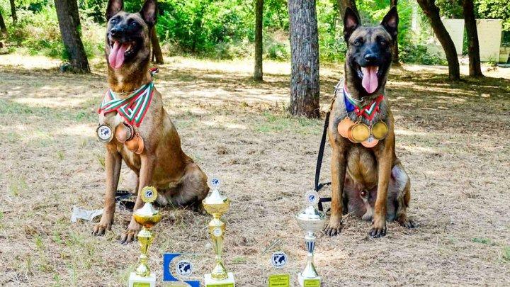 Patrupezii Poliției de Frontieră iarăși la înălțime. Câinii au făcut FURORI ȘI SPECTACOL la un concurs internațional