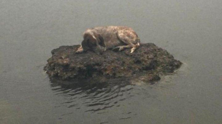 Câinele care a reușit să păcălească moartea în incendiile din Grecia. Unde a ajuns patrupedul