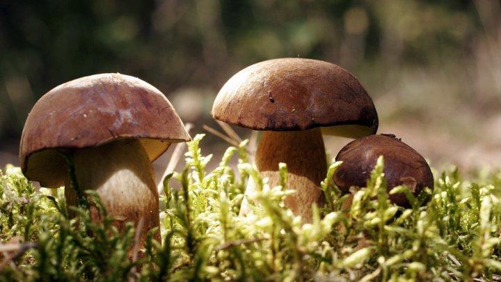 Atenţie la ciupercile de pădure! 11 adulți și trei copii au ajuns la spital cu intoxicaţii