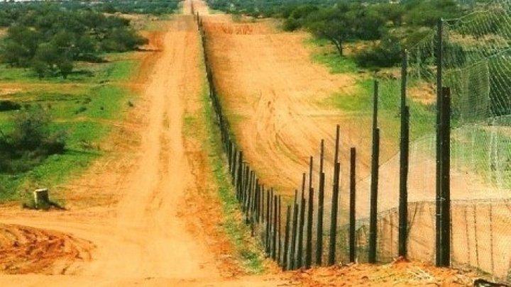 Cum a modificat cel mai lung gard din lume un întreg ecosistem