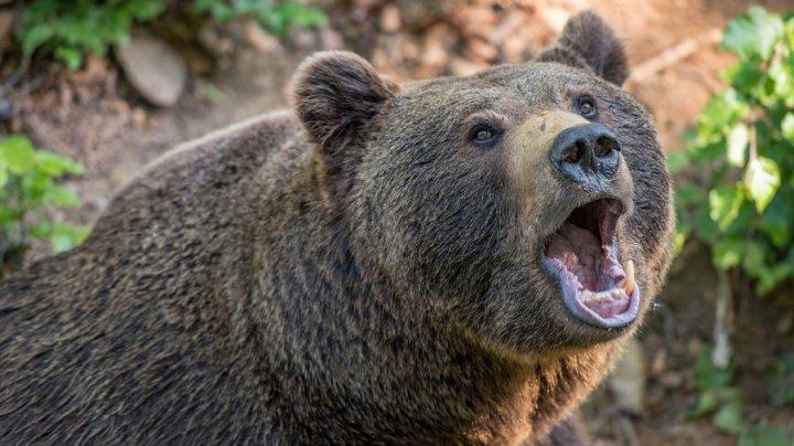 Tragedie în România. Un cioban a murit, după ce a fost atacat de urs