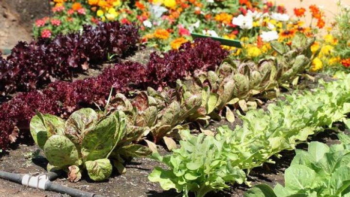 Soluții naturale să scapi de dăunătorii din grădina de legume sau de flori