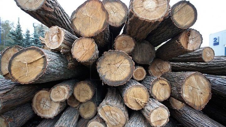 Dosar penal pentru furt de lemn în proporţii deosebit de mari din pădurea Parcul Nistrean