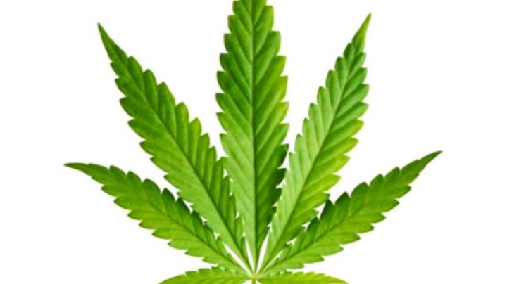 Google a interzis vânzările de marijuana de pe platforma Play Store