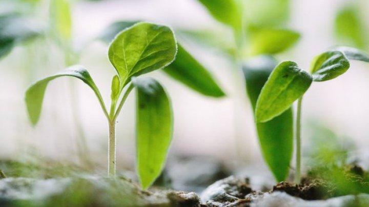 Plantele vor putea fi capabile să-şi creeze propriul lor îngrăşământ, datorită unei inovaţii