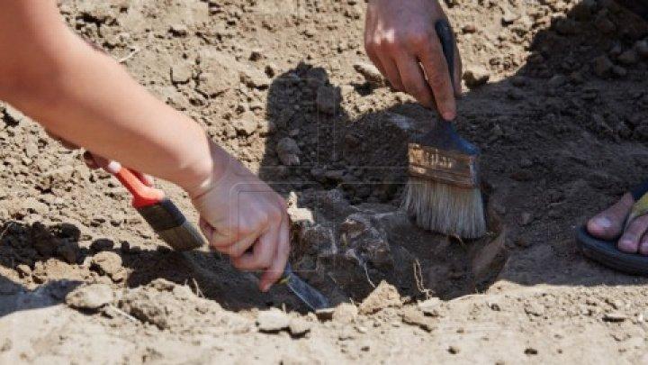 ULUITOR! Ce a găsit un agricultor, în timp ce lucra pământul