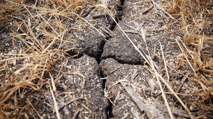 Astăzi este marcată Ziua mondială pentru combaterea deşertificării şi a secetei