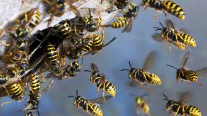 TRAGIC! Un bărbat a murit după ce a fost înţepat de viespi