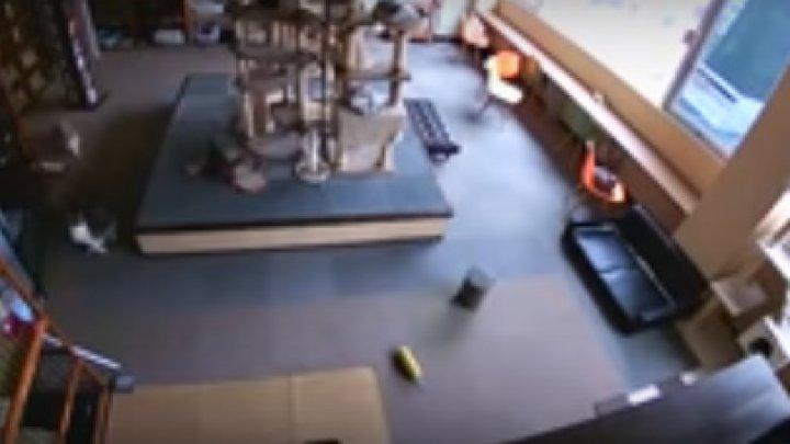 Reacție incredibilă! Cum au anunțat câteva pisici un cutremur (VIDEO)