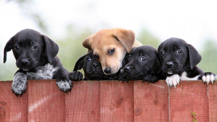 Magazinele care vând pui de câini şi pisici vor fi interzise în Marea Britanie