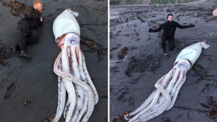 Un calamar gigant, descoperit de scafandri pe o plajă din Noua Zeelandă