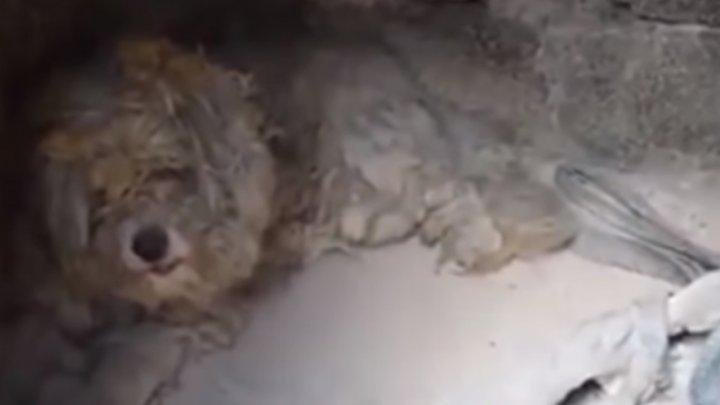 L-au găsit într-un cuptor. Cum a reușit un câine să scape cu viață din incendiul devastator din Grecia (VIDEO)