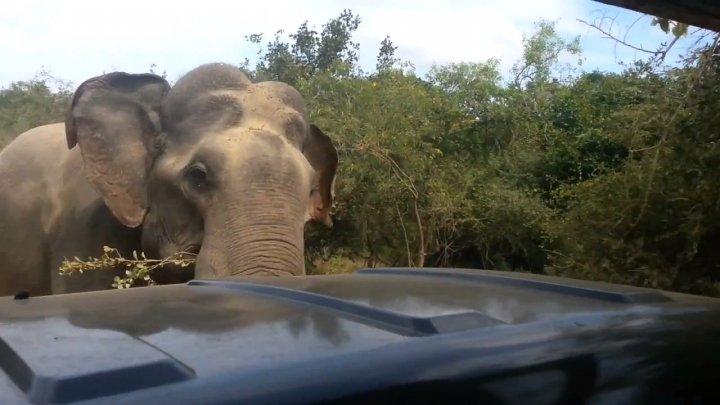 Un bărbat suspectat de braconaj a fost călcat de un elefant şi devorat de lei
