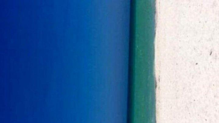 O nouă iluzie pune pe jar internetul. Tu ce vezi în imagine (FOTO)