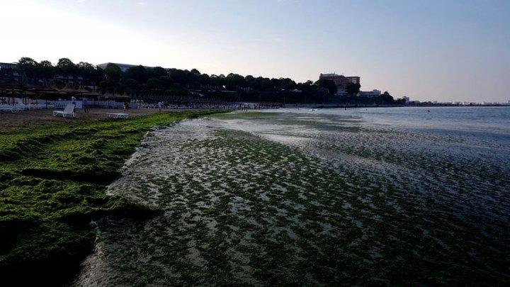 Invazie de alge toxice și meduze în apele din nordul Europei. Explicaţia specialiştilor