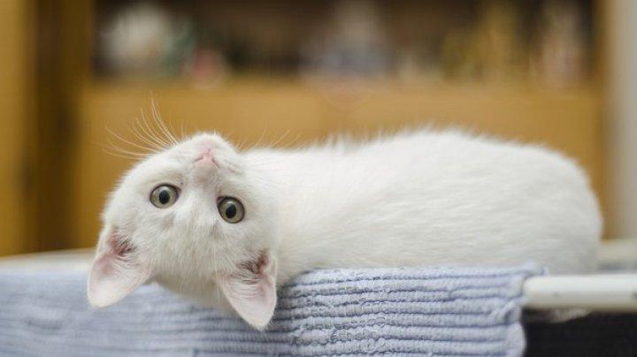 Ziua Internaţională a Pisicii: Ce ar trebui să ştii dacă vrei o pisică