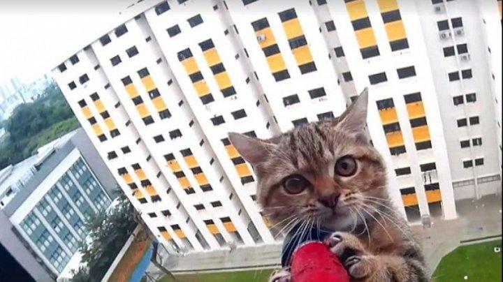 TREBUIE SĂ ŞTII! Ce trebuie să faci atunci când animalul de companie a căzut de la înălțime