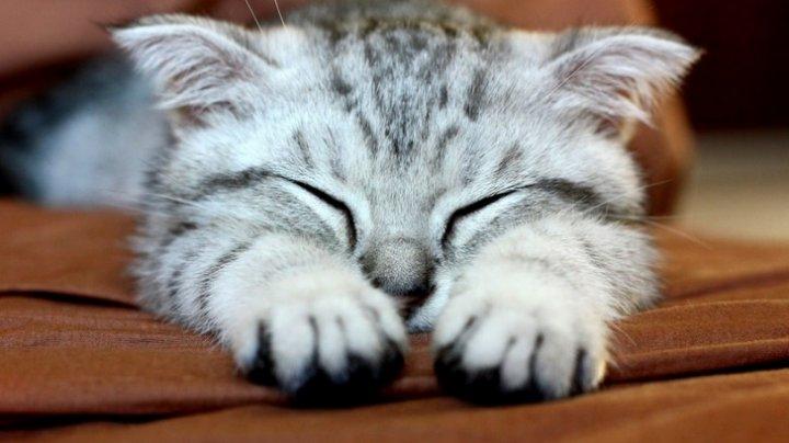 BINE DE ŞTIUT! De ce ar trebui să îți trăiești viața precum pisica ta