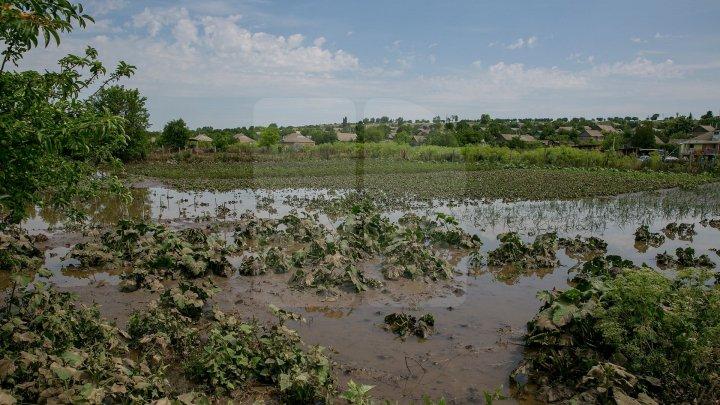 Ploile au făcut ravagii în raionul Cantemir: drum deteriorat, culturi agricole afectate şi două poduri pietonale, avariate