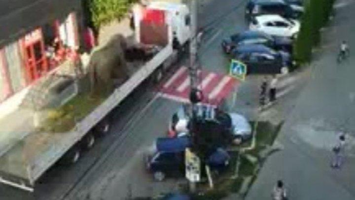 REVOLTĂTOR! Un elefant a fost plimbat pe un camion prin Sighetu Marmației pentru a promova un spectacol