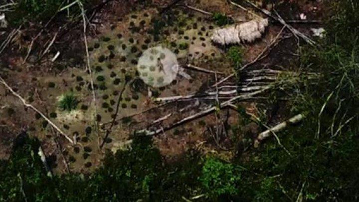 Nu a avut deloc contact cu lumea modernă. Primele imagini cu un trib izolat din Amazon (VIDEO)