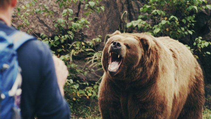 Cinci turiști din Bucureşti au fost fugăriţi de o ursoaică în timp ce coborau de la Vâful Omu