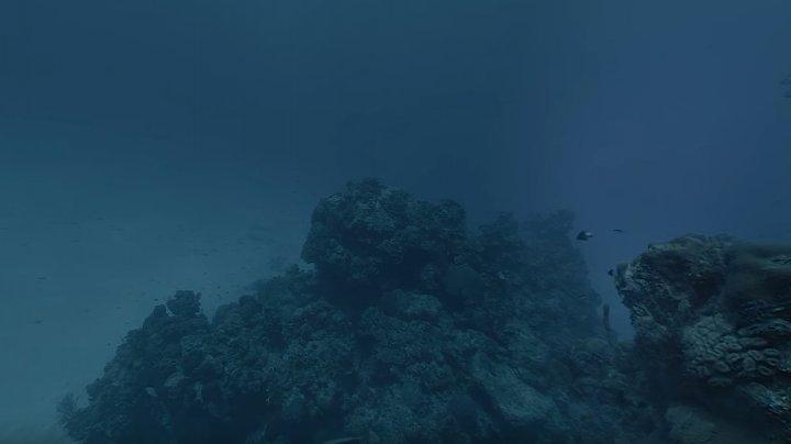 Hydrus VR, prima cameră subacvatică pentru filmări 8K  (VIDEO)