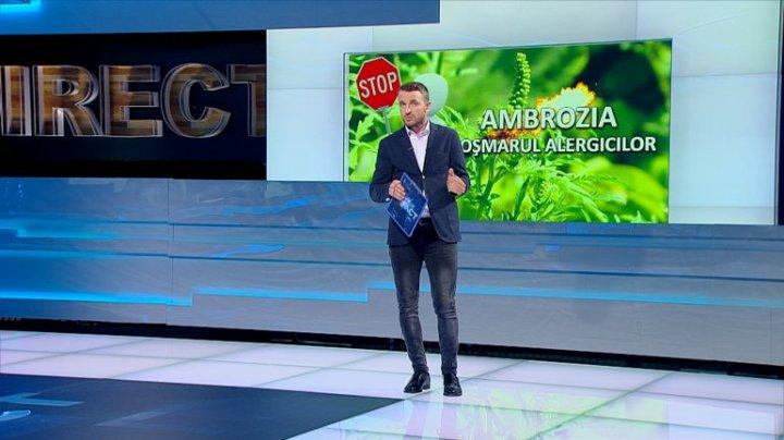 ISTERIA ambroziei. Efectele nocive dar şi proprietăţile tămăduitoare ale acestei plante (VIDEO)