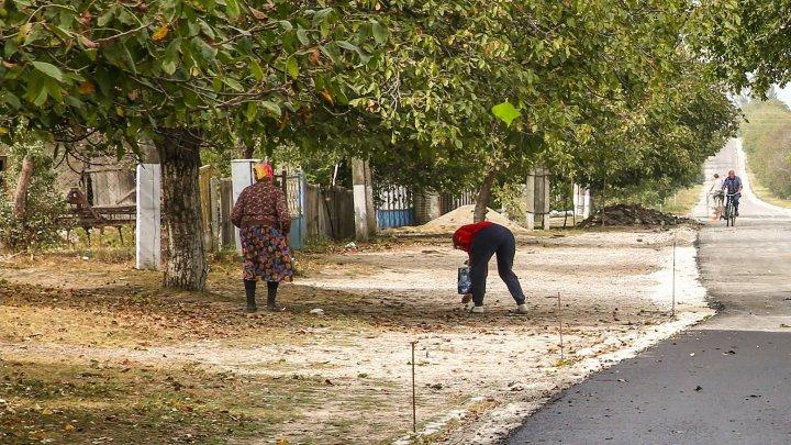 Culesul nucilor, maraton naţional pentru moldoveni. Care este preţul unui kilogram (VIDEO)