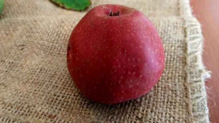 Avem mere şi nuci cu miezul roşu. Ai mânca aşa ceva (FOTO)