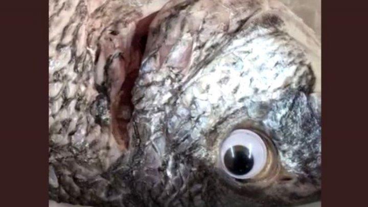 INADMISIBIL! Un pescar lipea ochi falși peștilor pentru a-i face să pară mai proaspeți