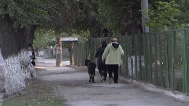 O femeie din Bălți și-a transformat apartamentul într-un azil pentru pisici și câini (VIDEO)