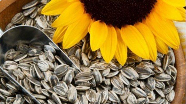 Sigur nu știai asta! Ce beneficii aduc semințele de floarea-soarelui