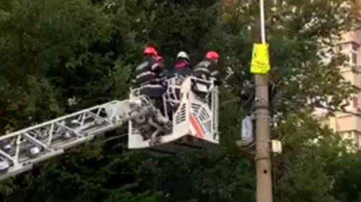 Protest sau prostie. Bărbatul urcat pe stâlp NU a mai rezistat şi a chemat pompierii să-l coboare
