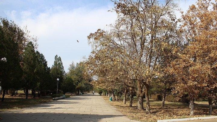 CATASTROFĂ ECOLOGICĂ în Crimeea. O substanţă uleioasă se depune pe maşini, garduri, iar vegetaţia se usucă