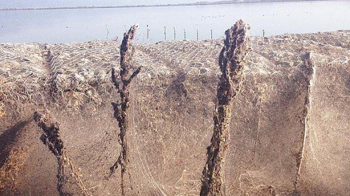 Pânză de păianjen de aproape UN KILOMETRU acoperă împrejurimile unui lac din Grecia. Vezi cum arată acesta