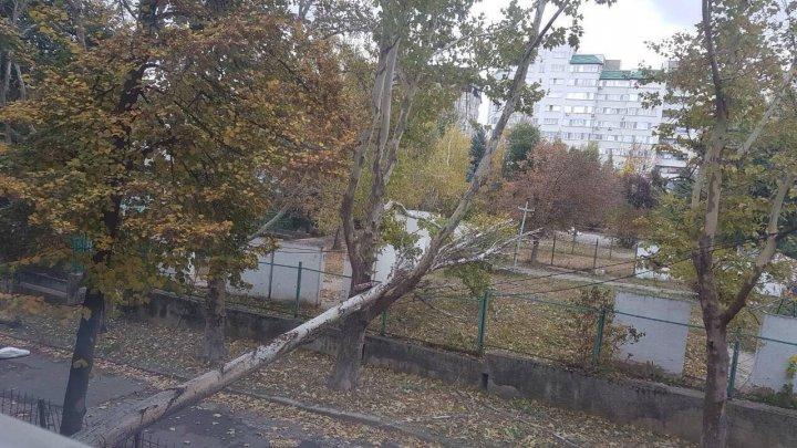 VÂNTUL PUTERNIC face ravagii în Capitală. În ograda liceului Dimitrie Cantemir a căzut un copac şi un stâlp (FOTO)