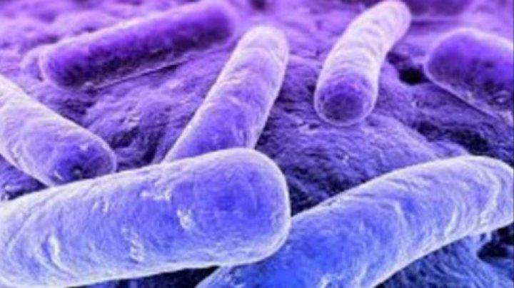 Bine de știut! Simptomele infecţiei cu bacteria E.coli