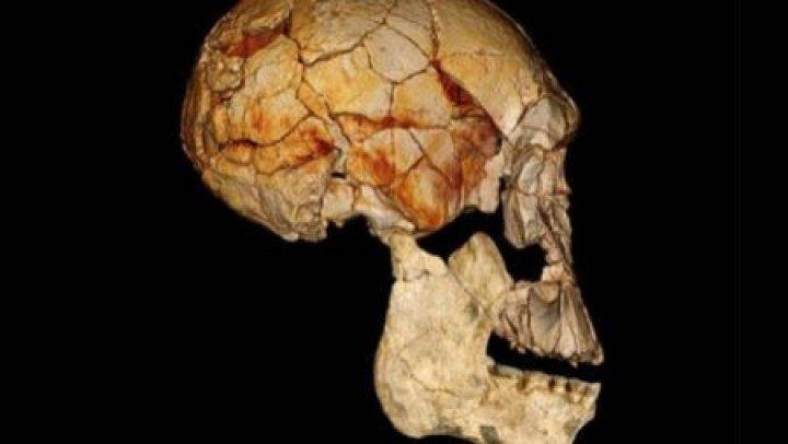 Cea mai veche fosilă umană braziliană Luzia, găsită printre resturile Muzeului din Rio