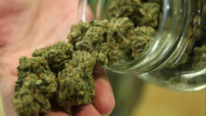 Să fumeze marijuana și să vrea să călătorească. O companie americană căută ambasadori naţionali care să promovoze produsele lor