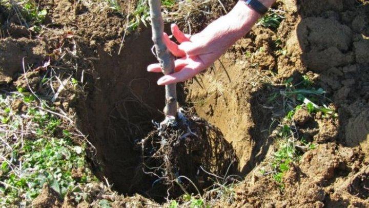 Haideți să plantăm FAPTE BUNE. Circa 13.000 de arbori vor fi sădiţi în Capitală. Cetățenii, îndemnați să participe la înverzirea orașului
