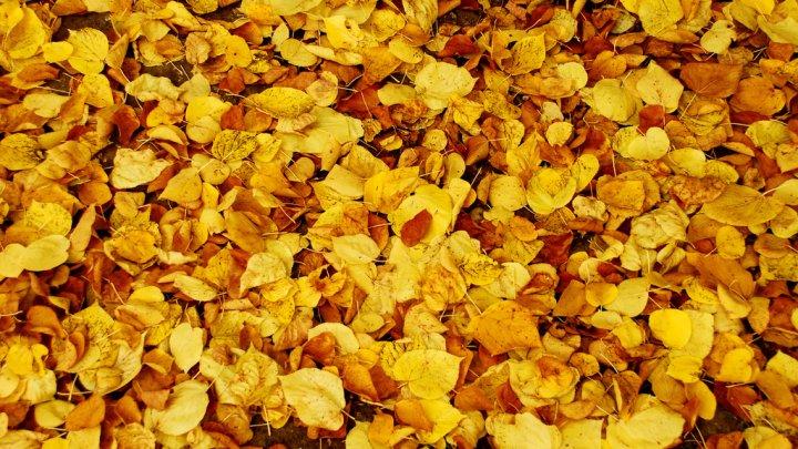 Frunzele de toamnă - un ajutor de încredere în grădină. Cum pot fi transformate în îngrăşământ ecologic (VIDEO)