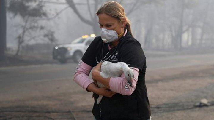 Imagini emoţionante! Sute de animale au fost SALVATE din incendiul din California