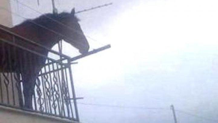 Cineva a confundat grajdul cu balconul. Un cal, surpins legat de balustrada unui balcon (FOTO)